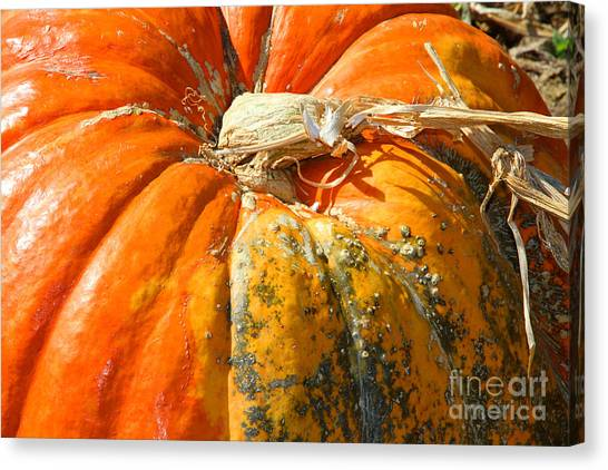 Corn Maze Canvas Print - Pumpkin Crust by Diana Raquel Sainz
