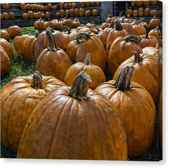 Pumpkin Patch Canvas Print - Pumpkin Farm by Peter Chilelli