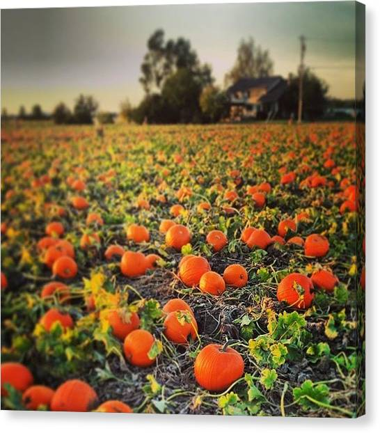 Harvest Canvas Print - Pumpkin Harvest by Go Inspire Beauty