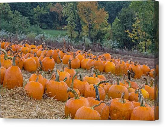 Pumpkin Parade Canvas Print