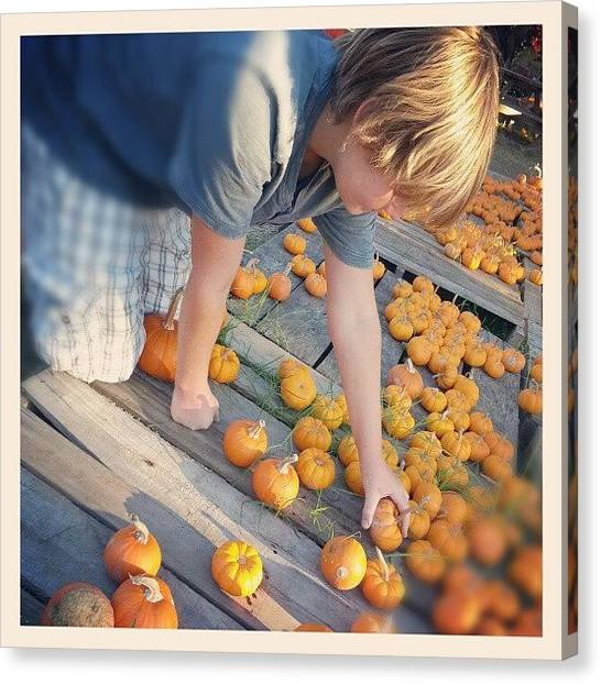 Harvest Canvas Print - Pumpkin Patch by Blake Kirby