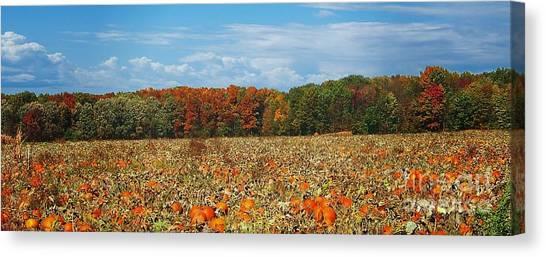Pumpkin Patch - Panorama Canvas Print