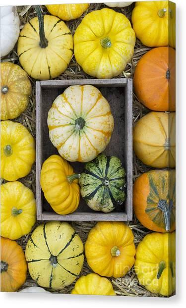 Gourds Canvas Print - Pumpkin Pattern by Tim Gainey