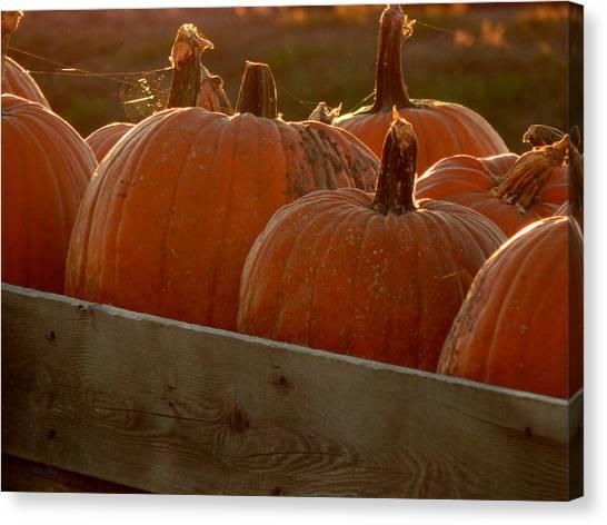 Pumpkin Webbed Light Canvas Print