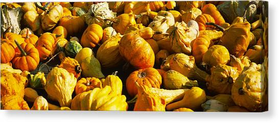 Pumpkin Patch Canvas Print - Pumpkins And Gourds In A Farm, Half by Panoramic Images