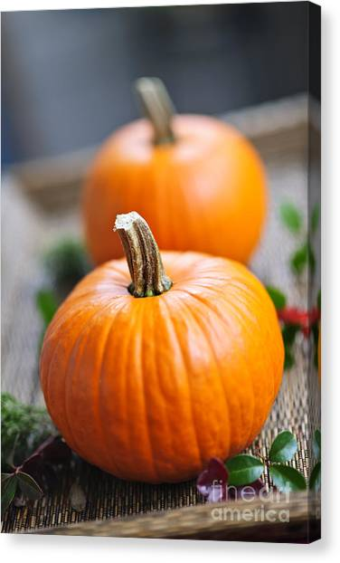 Thanksgiving Canvas Print - Pumpkins by Elena Elisseeva