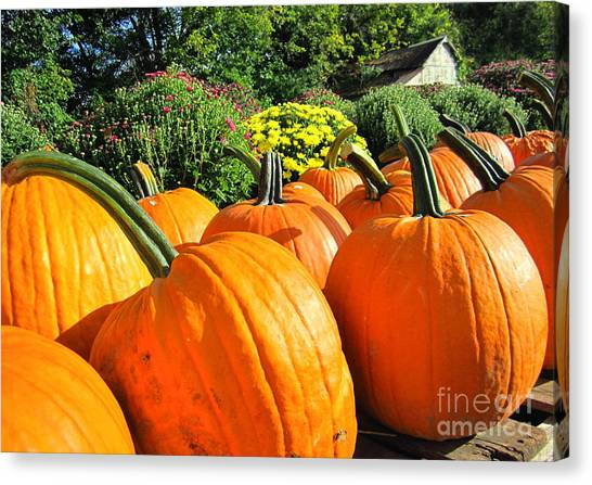 Pumpkins For Sale Canvas Print