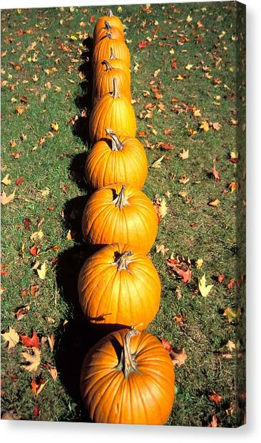 Thanksgiving Canvas Print - Pumpkins In A Row by Anonymous