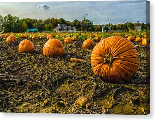Pumpkins Picking Canvas Print by Louis Dallara