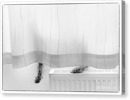 Dog Canvas Print - Pup Behind The Curtain by Natalie Kinnear