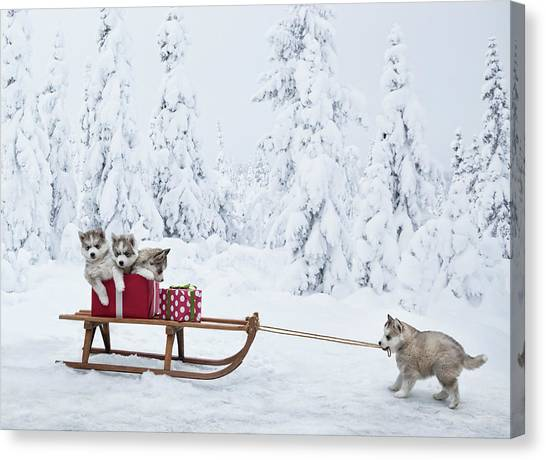 Puppies With A Sled Full Of Christmas Canvas Print