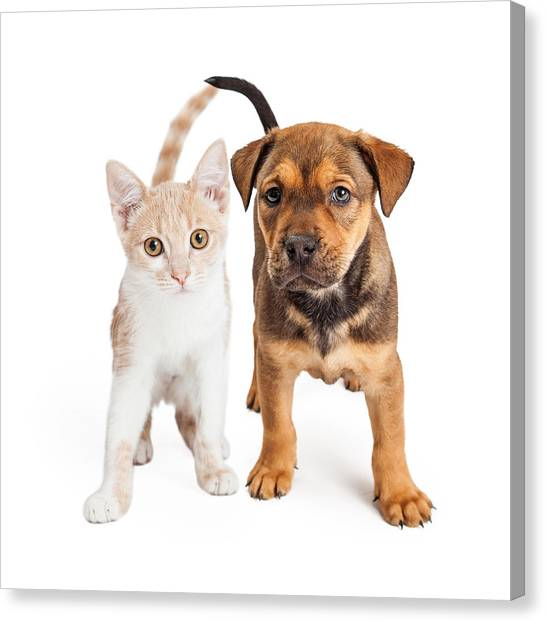 Puppy And Kitten Standing Together Canvas Print