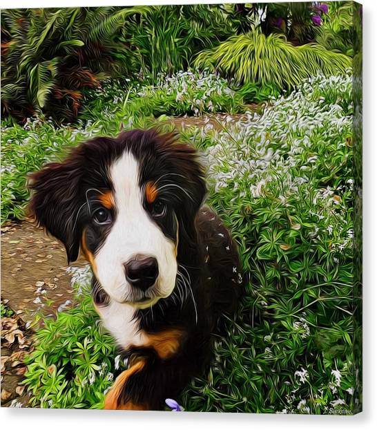 Puppy Art - Little Lily Canvas Print