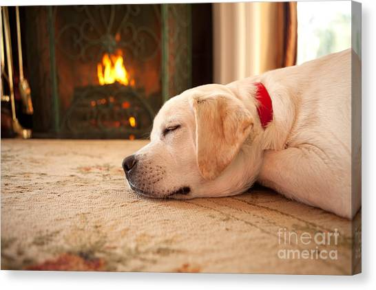 Yellow Lab Canvas Print - Puppy Sleeping By A Fireplace by Diane Diederich