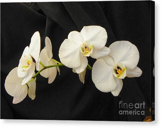 Pure And Simple Canvas Print by Carolyn Bistline