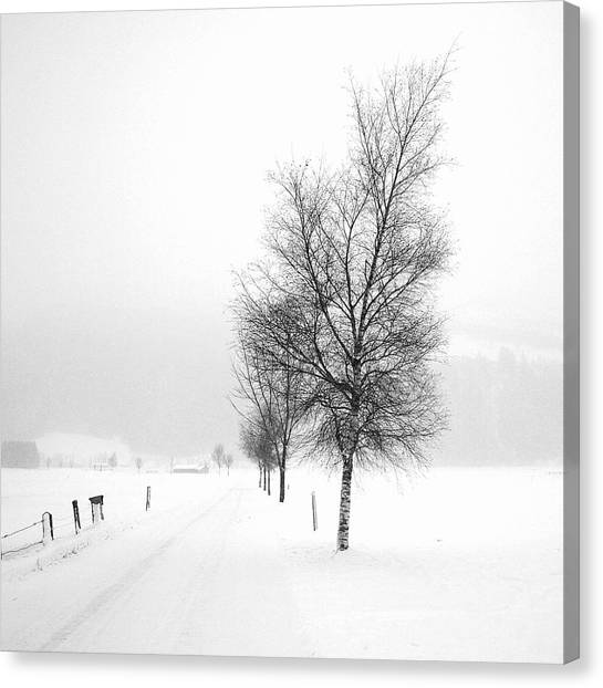 Pure White Canvas Print