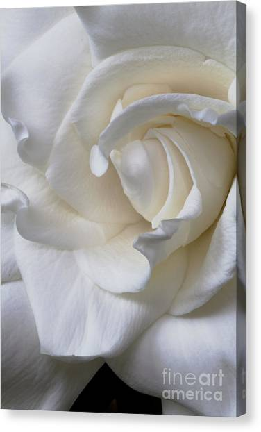 Purity All Profits Go To Hospice Of The Calumet Area Canvas Print
