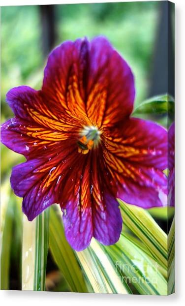 Purple And Orange Canvas Print