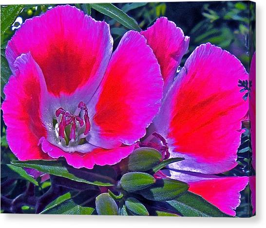 Purple And Red  Canvas Print by Martin S Gold
