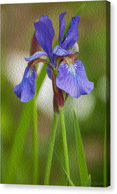 Purple Bearded Iris Oil Canvas Print