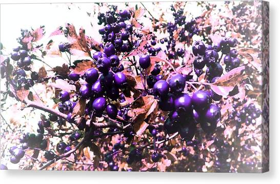 Fruit Trees Canvas Print - Purple Berries by Candy Floss Happy