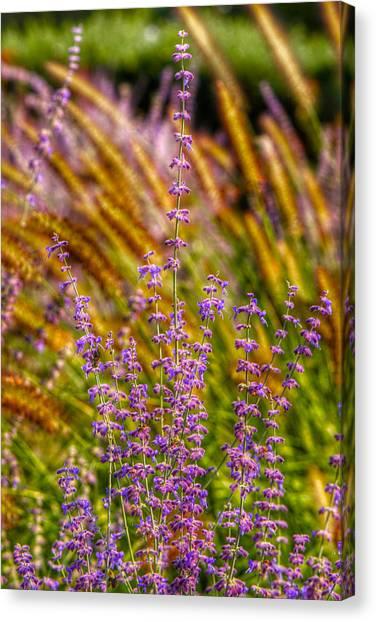 Purple Blooms Canvas Print by Kathi Isserman
