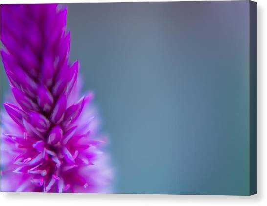 Purple Blur Canvas Print