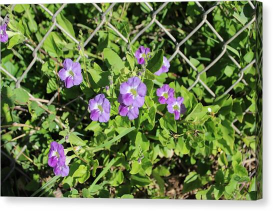 Bases Canvas Print - Purple Bush Flowers by Michael Kim