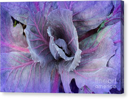 Purple Cabbage - Vegetable - Garden Canvas Print
