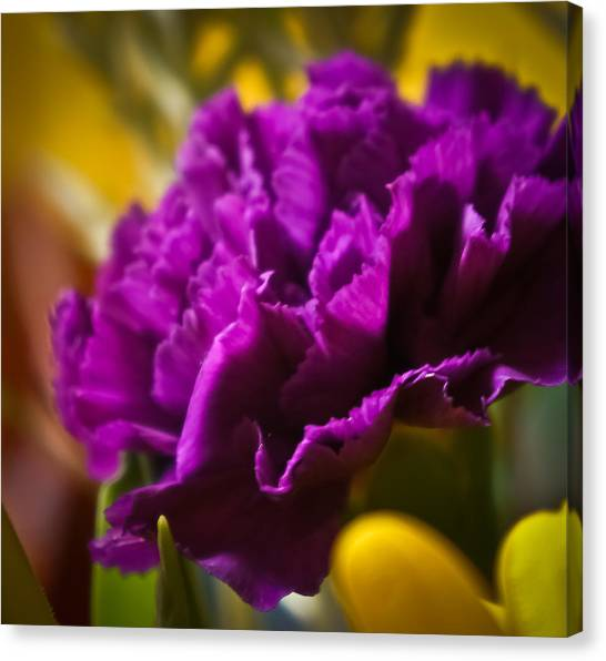 Purple Carnation Canvas Print
