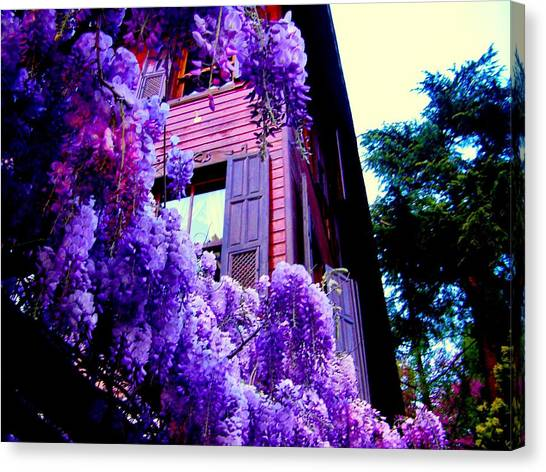 Purple Cheer Canvas Print