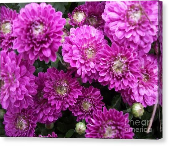 Purple Chrysanthemums Print Canvas Print