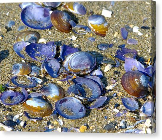 Purple Clam Shells On A Beach Canvas Print