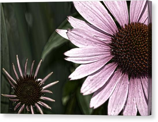Purple Coneflower Imperfection Canvas Print