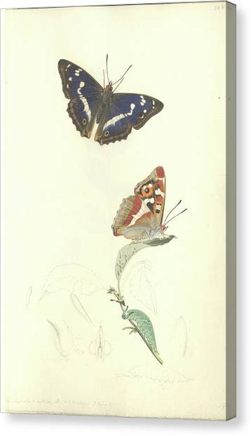 Purple Emperor Butterfly Canvas Print by Natural History Museum, London/science Photo Library