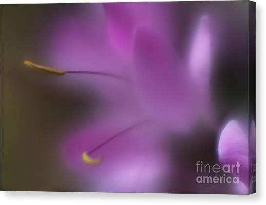 Purple Essence Canvas Print
