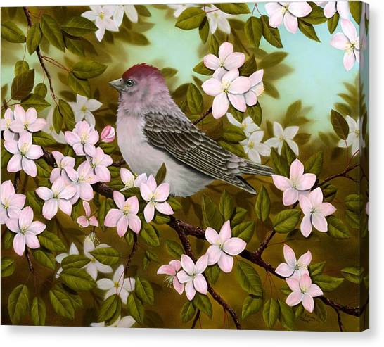 Finches Canvas Print - Purple Finch by Rick Bainbridge