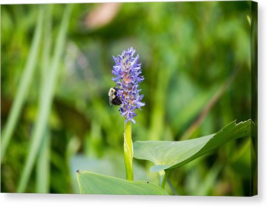 Purple Flower And Bee Canvas Print