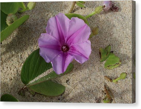Bases Canvas Print - Purple Flower In Sand by Michael Kim