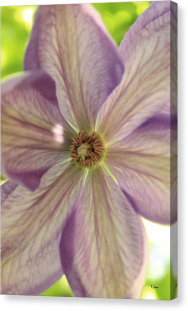 Purple Flower Canvas Print by Thomas Leon