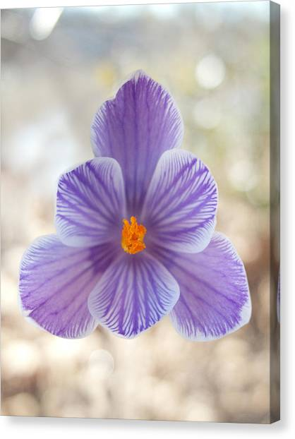 Purple flower with yellow stamen in central park photograph by purple flower with yellow stamen in central park canvas print by robert englebright mightylinksfo