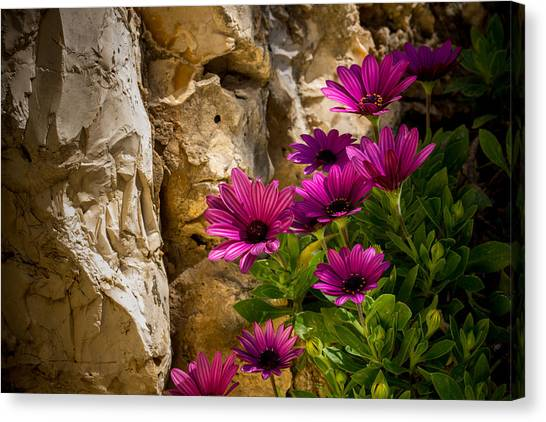 Purple Flowers And Rocks Canvas Print
