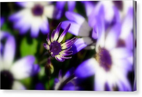 Purple Flowers Canvas Print by Barbara Walsh
