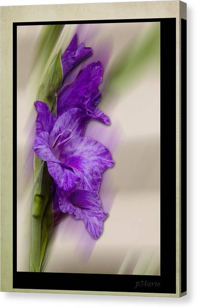 Purple Gladiolus Bloom Canvas Print