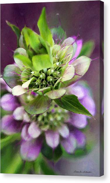 Purple Horsemint Wildflower Canvas Print