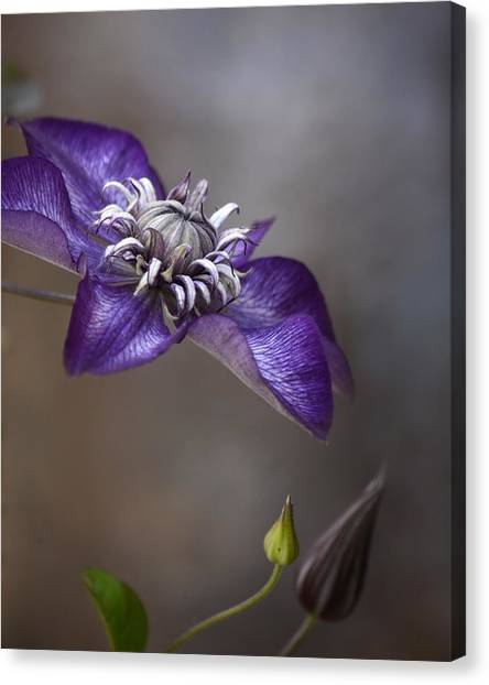 Purple Love Canvas Print