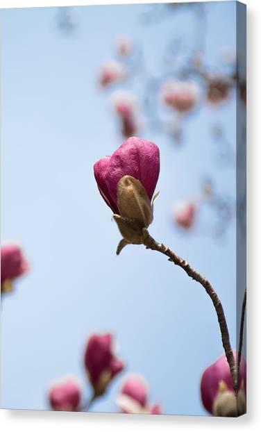 Purple Magnolia Single Canvas Print by Priyanka Ravi