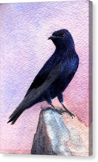 Purple Martin Canvas Print