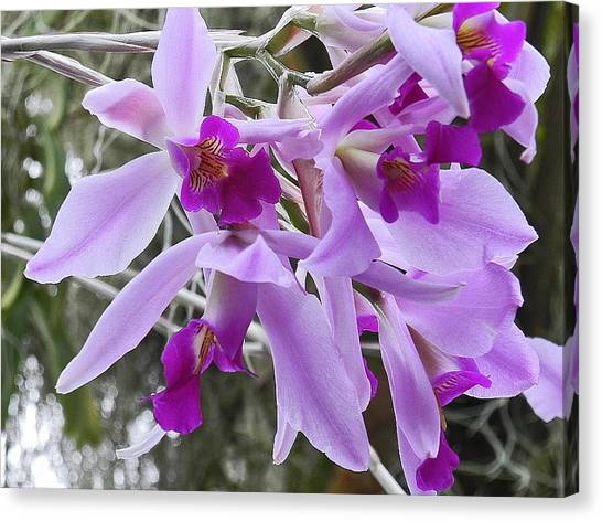 Purple Orchid Personality Canvas Print