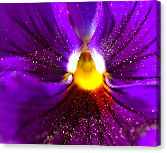 Purple Pansy Detail Canvas Print